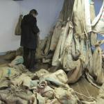 Delfzijl, 2013, zoldering Molen Adam in verval